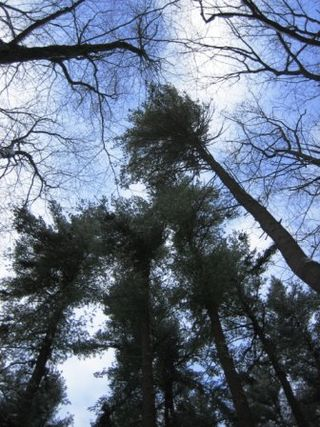 Trees on a Campout