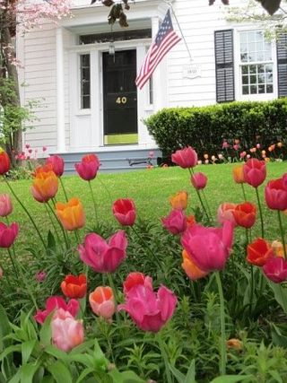 Tulips and the American Flag