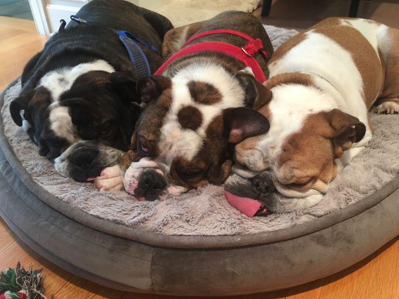 3 cuddle pups