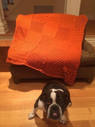 Otis and Orange
