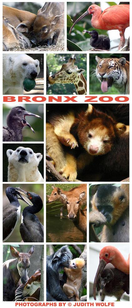 Bronx7_17_07_2